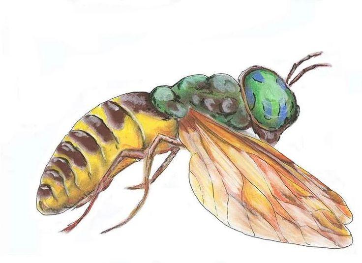 osa, owad, pastela