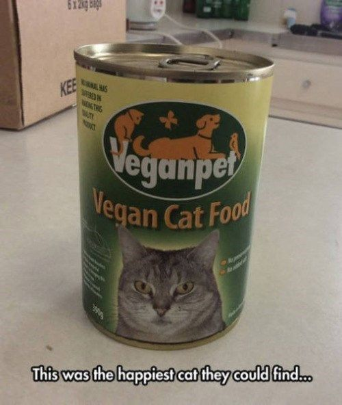 Vegan Cat Food Cat Doesn't Approve of Your Animal Cruelty