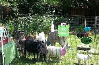 Little Explorers Petting Zoo - Mobile Petting Zoo