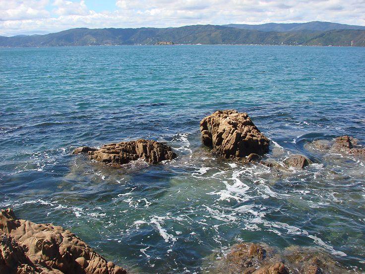 NZ around Miramar - Eugeny Glazyrin - Веб-альбомы Picasa