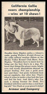 1549 Best Vintage Collie Photos Or Images Images On Pinterest Collie Doggies And Rough Collie