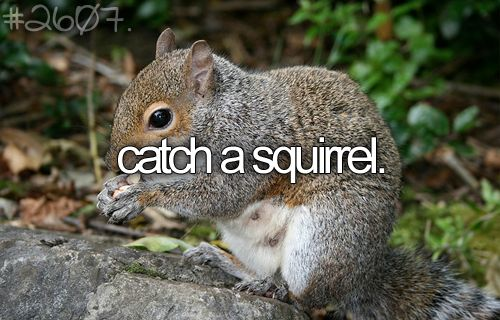 And keep it as a pet!: Humane Ways, Bucketlist, Garden Ideas, Animals, Squirrels, Gardening, Gardens, The, Bucket Lists