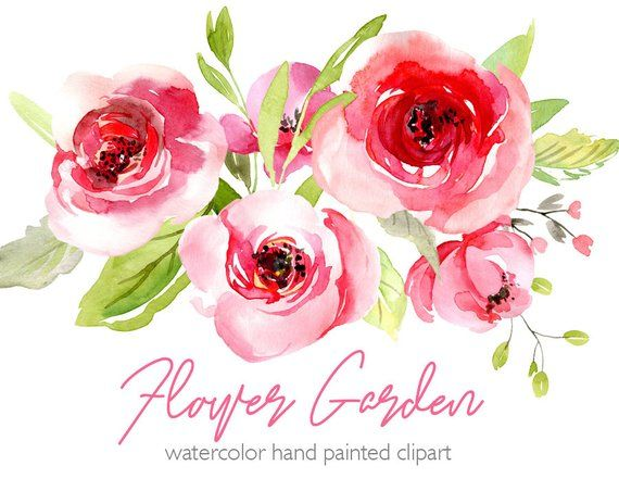 Watercolor Flowers Clipart Pink Blush Red Light Florals Roses