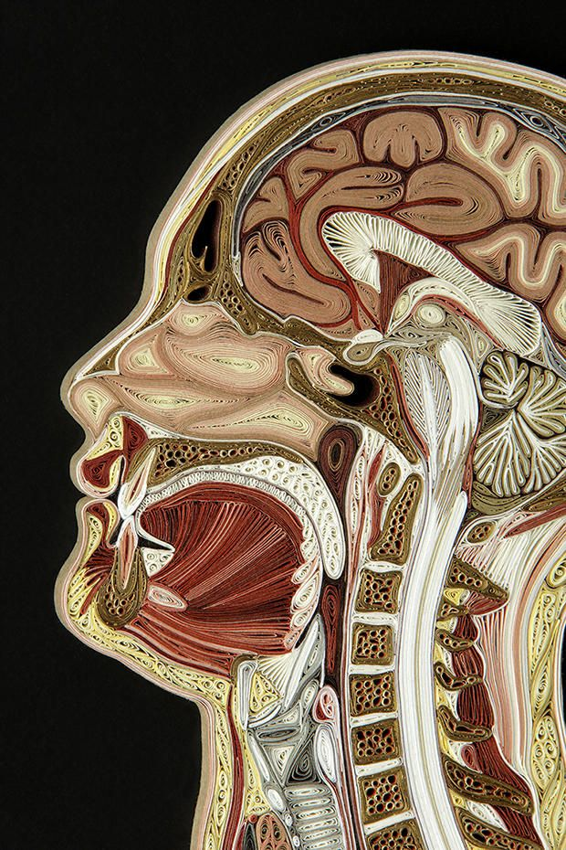 These Intricate Anatomy Cross Sections Are Made From Old Books | Mental Floss