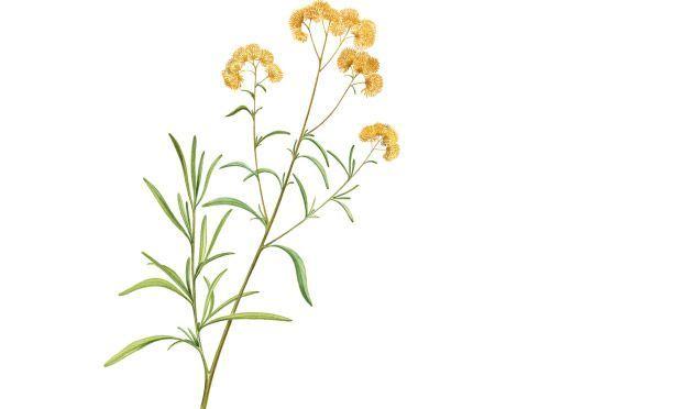 Conheça e saiba usar 37 plantas medicinais
