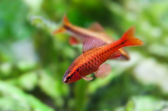 小型 熱帯魚