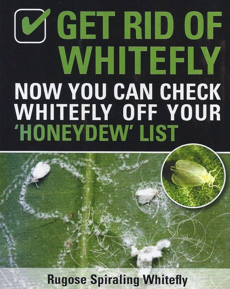 How to Get Rid of Whiteflies   White flies, Garden pests ...