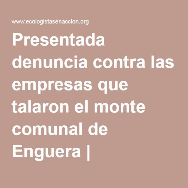 Presentada denuncia contra las empresas que talaron el monte comunal de Enguera | Ecologistas en Acción