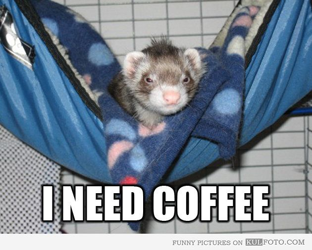 I Need Coffee Funny Pictures | Ferret: I Need Coffee | Picture 38790