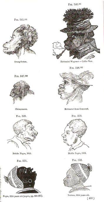 """Συγκριτική μελέτη ανάμεσα σε πρωτεύοντα και """"Νέγρους"""" - 1854"""