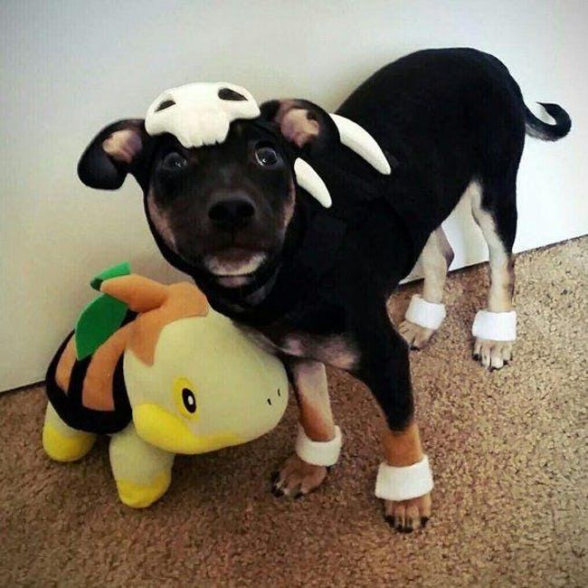 Houndour With Images Puppy Halloween Costumes Dog Halloween