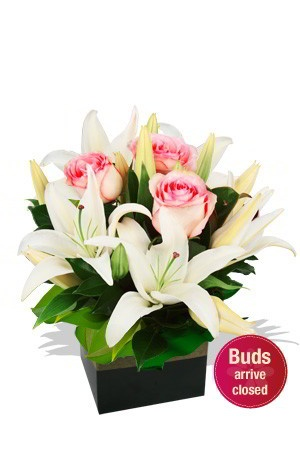 Delicate    This appealing little arrangement with its shy Roses in soft pink pastels mingled betwixt purest white Oriental Lilies discloses it's message delicately and softly, with a subtle, vestal yet alluring hint of come-hither. $100.39