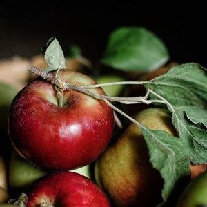 Как «заставить» яблони п…