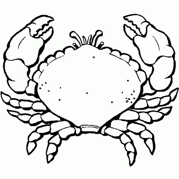48 mejores imgenes de animales del mar en Pinterest  Animales