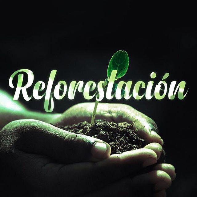 Es necesario compatibilizar las explotaciones forestales con la regeneración de las mismas mediante replantaciones que produzcan nueva materia prima al ritmo pertinente, de otra manera, estaremos agotando nuestros recursos. #forestal #reforestación #ambiente#proyectos