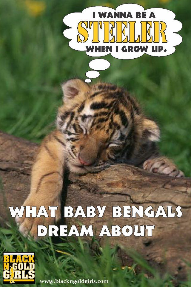 What Baby Bengals Dream Of Steelers Friday Humor What A