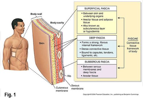 Motion is Lotion... How bodywork Lubricates joints and Fascia