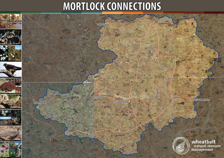 Wheatbelt NRM is working to connect remnant vegetation in the Mortlock Catchment. http://www.wheatbeltnrm.org.au/mortlock