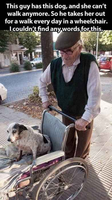The best chauffeur in the world | 33 Pictures That Will Make You Glad to Be a Human