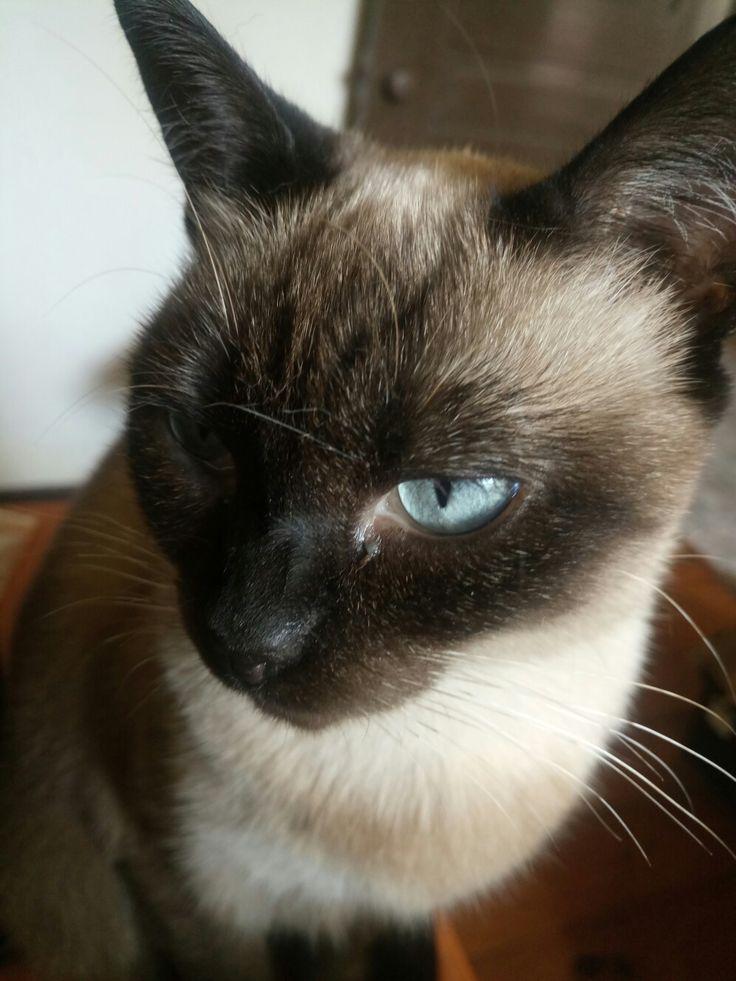 Mia's blue eyes