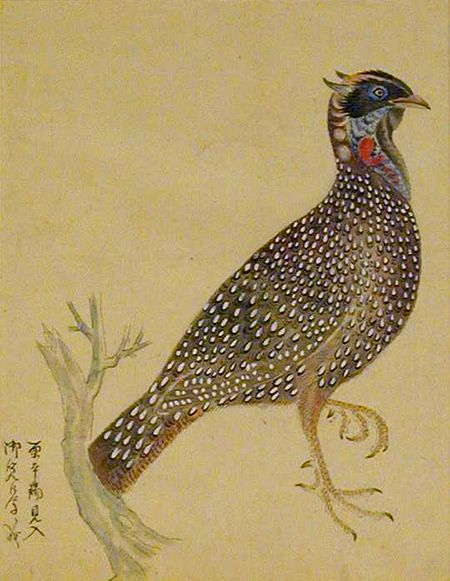 Bird of the Quail Family on One Foot Japanese, 1700s
