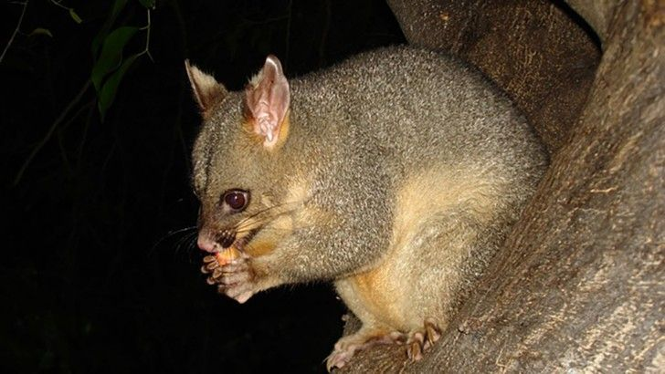 Australia S Road Kill Map With Images Animals Are Beautiful People Wildlife Australian Mammals