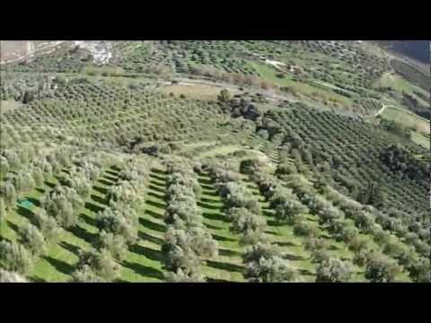 Μάζεμα ελιάς στην Κρήτη * Collecting olives in Crete - YouTube