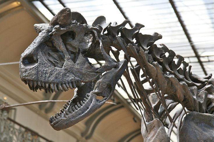 Hirtelen haltak ki Európában / Dinosaurus became extinct suddenly in Europe Forrás/source: pixabay.com