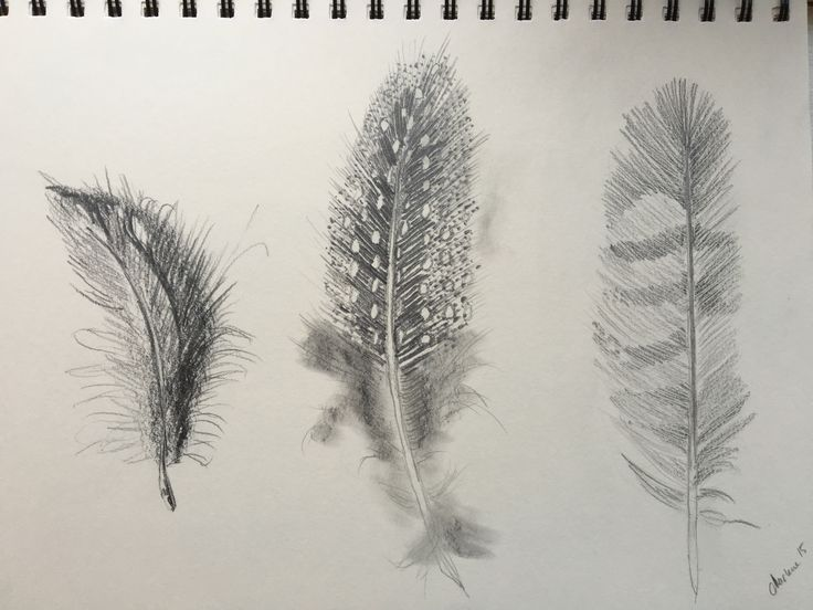 Feathers. Pencil drawing by Marlene Jørgensen.