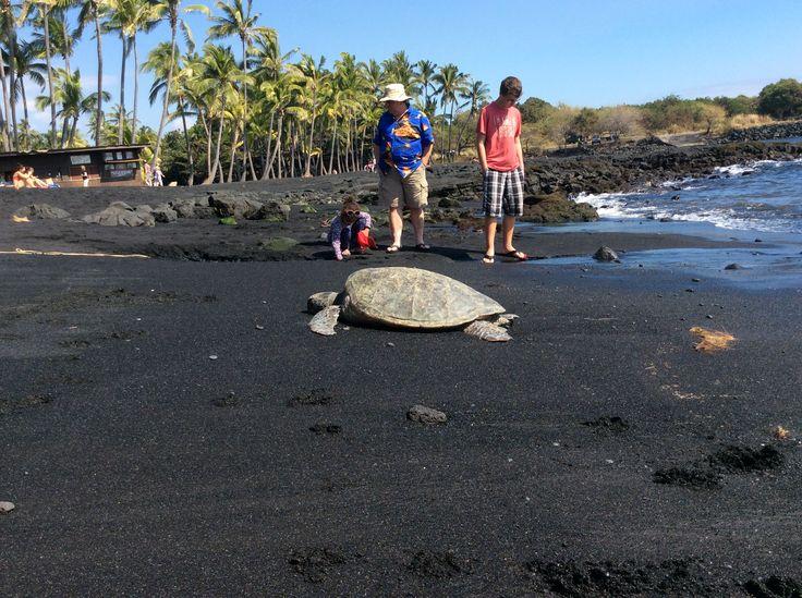 #Hawaii #black #sand #beach #turtles