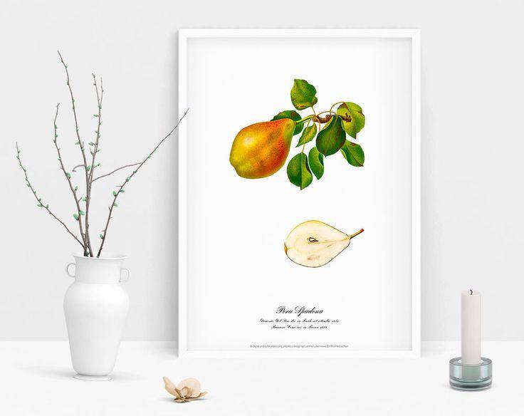 Watercolour Pear poster wall art Botanical vintage antique geclee art print  #Vintage