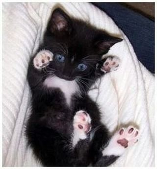 My Number one cutie patootie – just look at those jelly-bean toes !! #kittens #c…