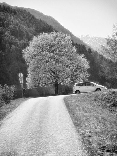 bwstock.photography - photo | free download black and white photos  //  #road #climb #lime-tree
