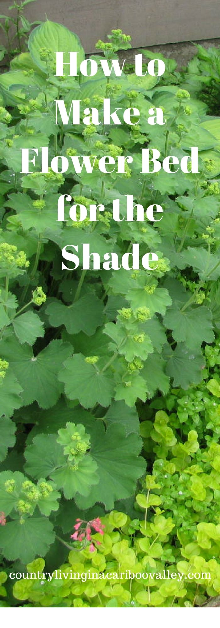 Create a low maintenance flower bed that will thrive in the shade!