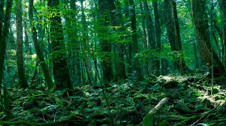 Located at the base of Mt. Fuji in Japan, Aokigahara is home to a number of rocky, icy caverns. It is known as the most popular place for suicides in Japan, earning it the name 'Suicide Forest.' The high rate of suicide has led officials to place signs in the forest urging suicidal visitors to seek help.