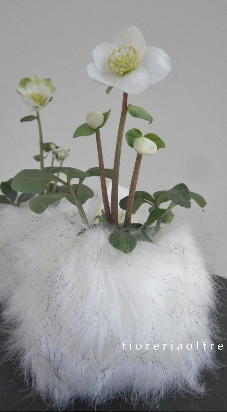 Fioreria Oltre/ Hellebores in furs  https://it.pinterest.com/fioreriaoltre/fioreria-oltre-christmas/