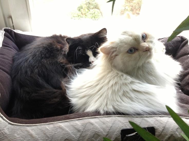 Good morning! Our companions Simon (r.) and Barkley.