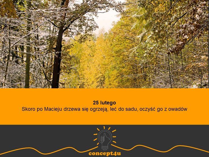 przysłowia polskie na miesiąc luty - www.concept4u.eu