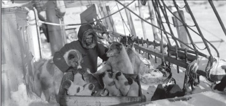 Ludvig Mylius-Erichsen just before the Danish expedition.