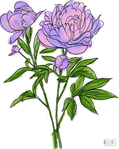 Paeonia Officinalis or European Common Peony