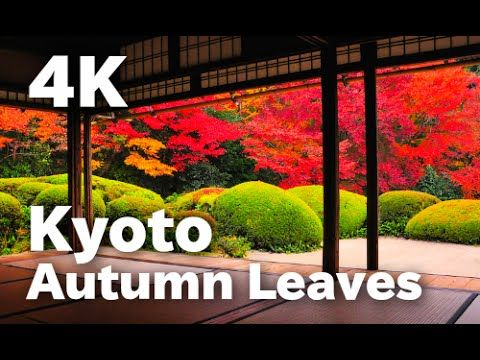 [4K]KYOTO JAPAN 美しい京都の紅葉 More beautiful Kyoto autumn in the world 京都観光 日...