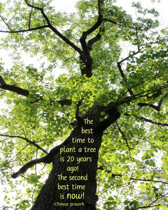 Chinese Proverb about planting trees. | Trees to plant ...
