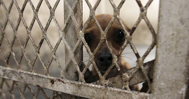 Reforma de la ley de protección animal FIRMA Y COMPARTE ESTA PETICIÓN AHORA!