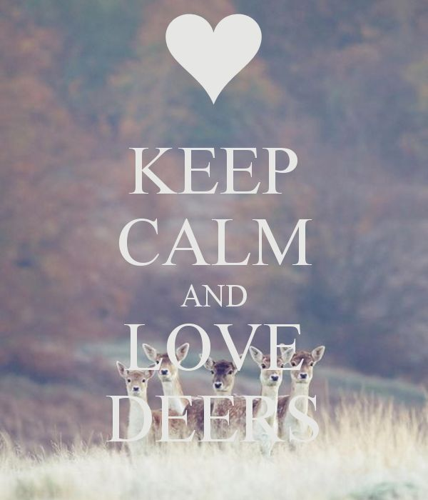 KEEP CALM AND LOVE DEERS