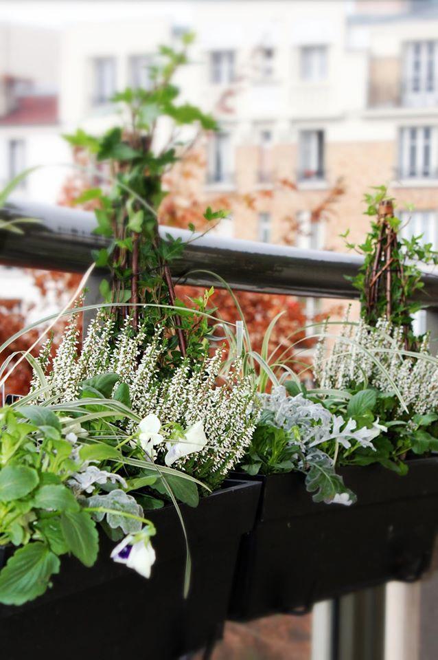 www.fleursaubalcon.com Abonnement de jardinière fleurie pour balcon. Pensées, lierre et bruyère.