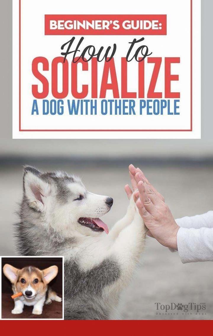 K9 Dog Tricks Dog Psychology Dog Clicker Training Dog Training