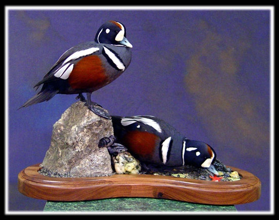 Upland And Waterfowl Taxidermy Duck And Goose Mounts