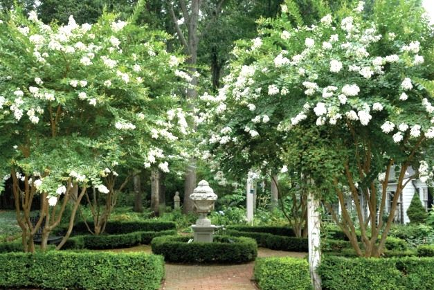 Find useful gardening tips and articles at http://www.thebloomingoasis.com  beautiful gardens ~ crepe myrtle trees