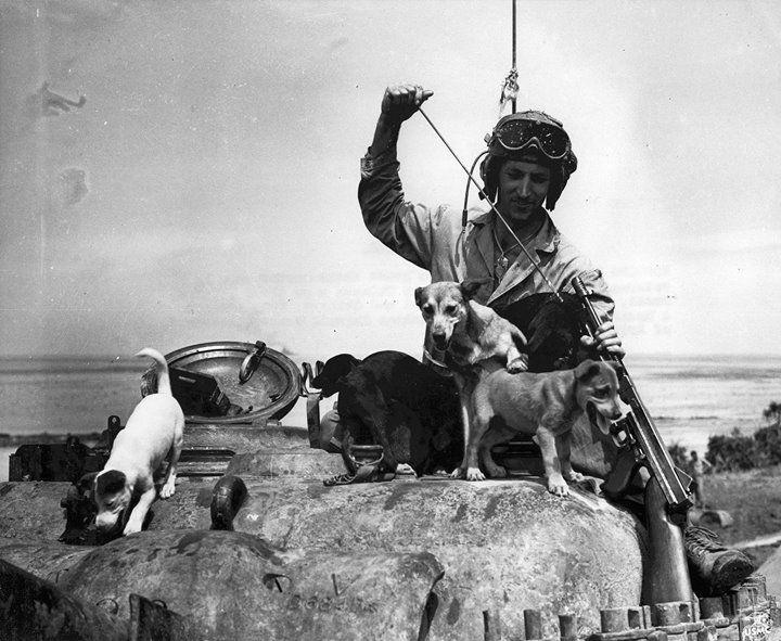 US Marine Private Bruce Rutherford cleaning his Thompson submachine gun while playing with puppies Nanci Shoto Sake Zero Banzai and Okinawa on Okinawa Japan 1 June 1945.