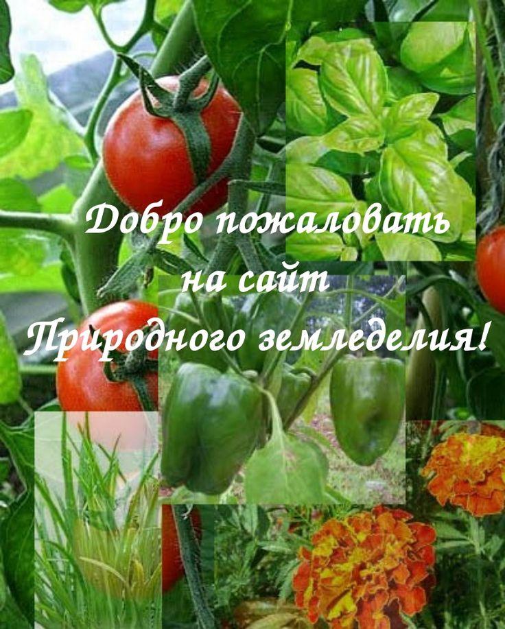Уральский огород - без особых хлопот!: ПРИРОДНОЕ ЗЕМЛЕДЕЛИЕ!
